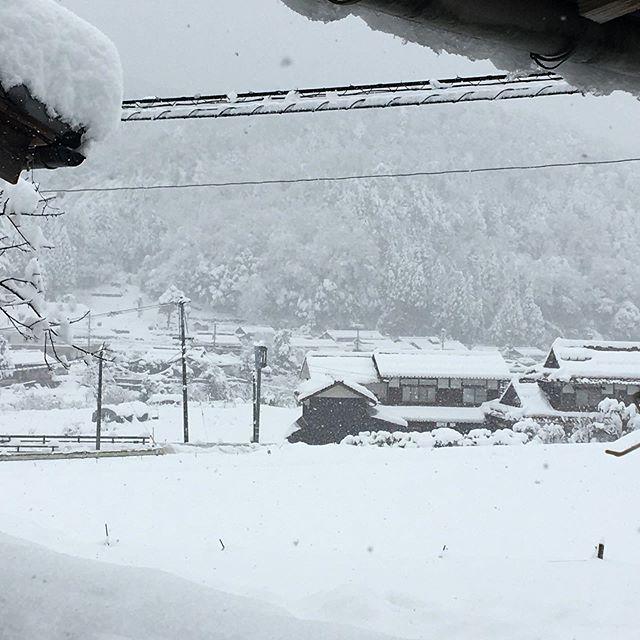 昨日は雪がたくさん降ったのでさぞ直売には野菜がないだろうと出発してみたら市内には雪はほとんどありませんでした。晴れのまちでレインシューズ。車に雪。鳥取西郷はずかしあるあるかな。白ネギもいつも通り山盛りでした。ハウス内も昨日はカチコチに凍っていましたが今日からわけぎや九条ネギ、芽キャベツ、リーフレタス、人参菜、わったいなへ出荷再開です。#畑#田舎#田舎暮らし#専業農家#とっとり#鳥取市#移住#農業女子#野菜#野菜販売#旬#農業#就農#やさい#地方発送#kushi#kushitani#わったいな