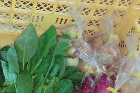 野菜がそろってきました🥳