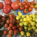 今日は直売にトマト、最近野菜売れないから売れてほしいな〜。 #畑#田舎#田舎暮らし#専業農家#とっとり#鳥取市#移住#農業女子#野菜#野菜販売#旬#農業#就農#やさい#地方発送#kushi#kushitani#トマト#マイクロトマト#牛の心臓#パープルキャンディ