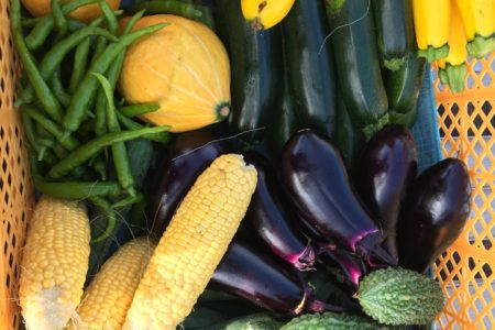 それぞれちょっとずつですが、種類が野菜の種類が増えてきました。1番収穫大変なのがマイクロトマトなんせ時間かかるでも草の中育ってくれてありがとう。野菜詰め合わせご注文承りまーす。#畑#田舎#田舎暮らし#専業農家#とっとり#鳥取市#移住#農業女子#野菜#野菜販売#旬#農業#就農#やさい#地方発送#kushi#kushitani#ズッキーニ#愛菜館#わったいな#鳥取直売#コリンキー#販売受付中#さいごう#西郷#河原町#マイクロトマト#マイクロトマトイエロー